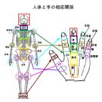 手の身体の相応関係